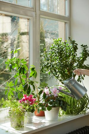 Pots with bright plants on a white windowsill