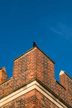Black crow sitting on top of red brick parapet of Tudor period architecture exterior wall Stock Photo