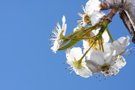 light zoom: spring Stock Photo