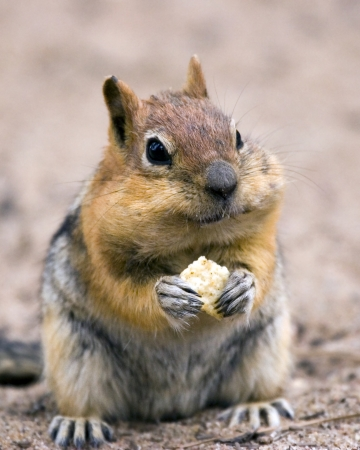 with humor: squirrel Stock Photo