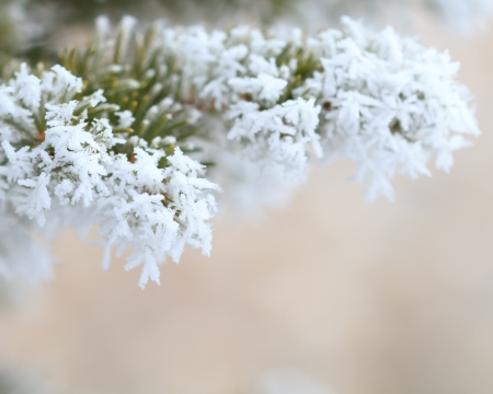 white winter: frost