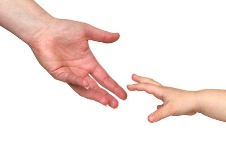 reaching hands: twee katachtige geïsoleerd op witte achtergrond