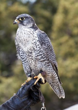 falcon Reklamní fotografie