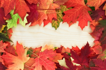 autumn colour: fall leafs on wooden board
