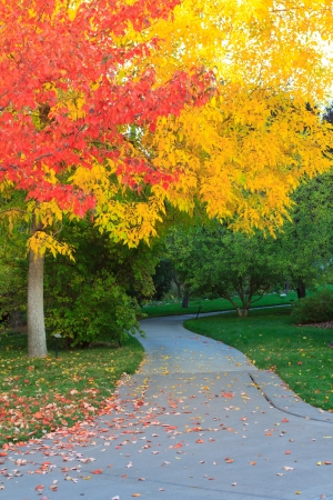 autumn colour: fall at the park