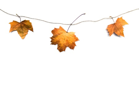 saturate: fall leafs