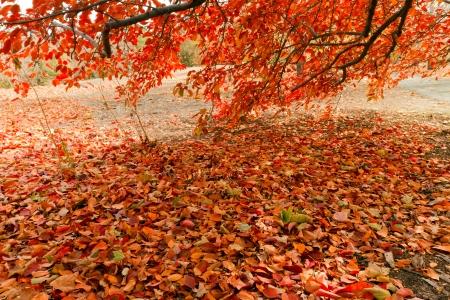 saturate: fall tree Stock Photo