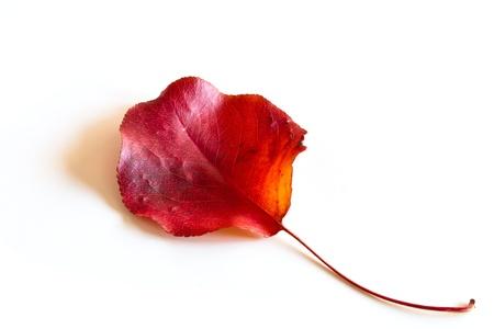 saturate: fall leaf Stock Photo