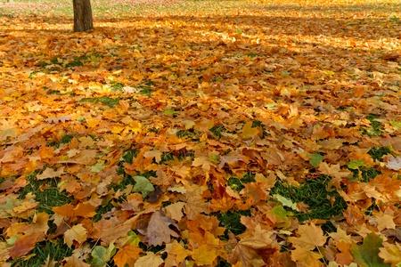fall of the leafs: fall leafs