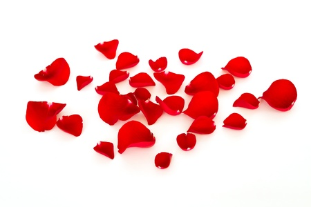 red rose petals Stock Photo - 13520282