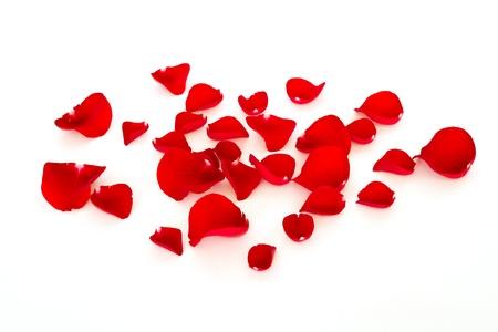 Rode rozenblaadjes Stockfoto - 13520282