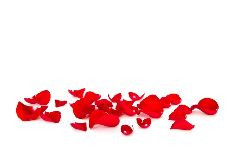 rose petals: red rose petals Stock Photo