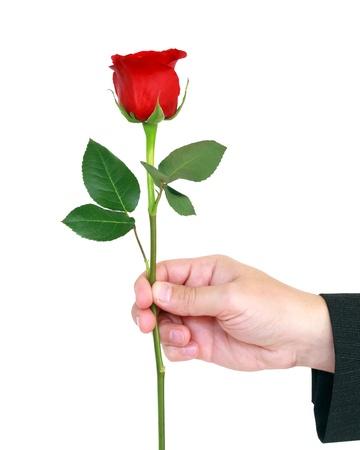 dar un regalo: rosa roja en la mano aisladas sobre fondo blanco Foto de archivo
