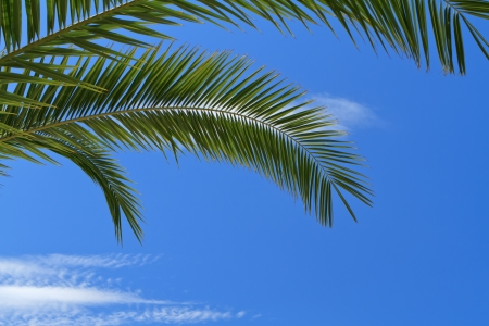 palm: palm tree leaves over blue sky Stock Photo