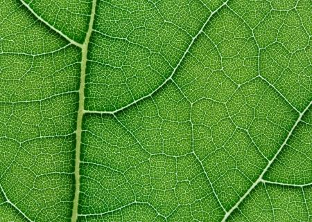 on leave: green leaf texture