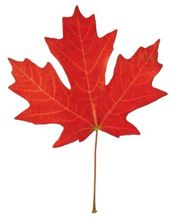 fall leaf Stok Fotoğraf