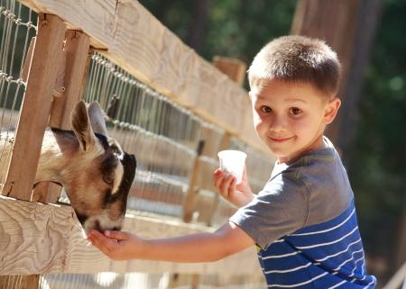 animals feeding: goat feeding