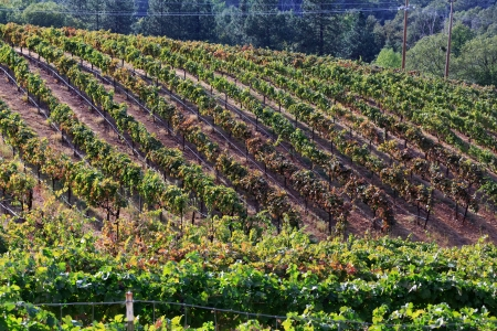 wine grower: vineyard Stock Photo