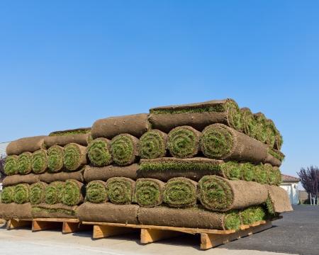 stacks of sod rolls photo