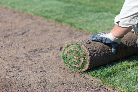 installing new sod photo