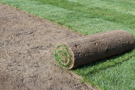 sod: sod for new lawn