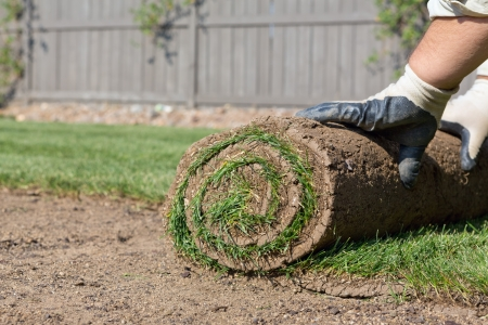 sod: installing new sod Stock Photo