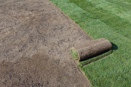 sod for new lawn photo