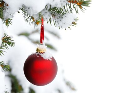 christmas tree branch with snow and ornament Stock Photo - 22831211