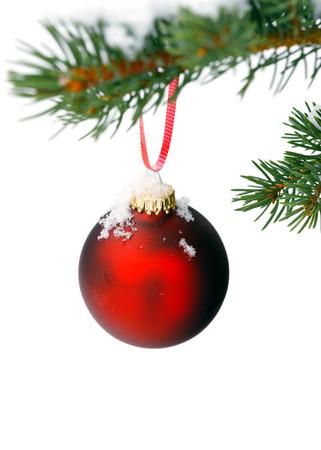 branche sapin noel: No�l branche d'arbre avec de la neige et de l'ornement
