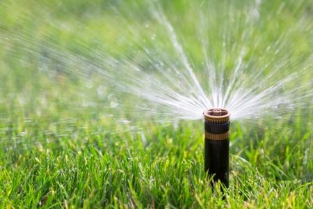 sprinkler watering grass Reklamní fotografie