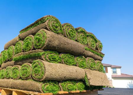 sod: sod for new lawn
