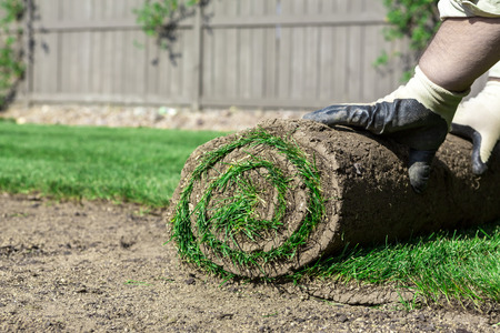 Installing new lawn photo