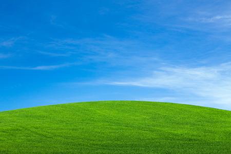 champ vert: Champ vert sous le ciel bleu