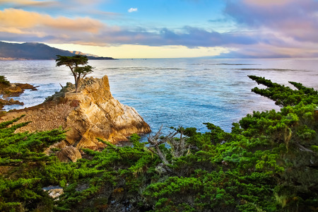 외로운 사이프러스 나무, 캘리포니아 해안 스톡 콘텐츠