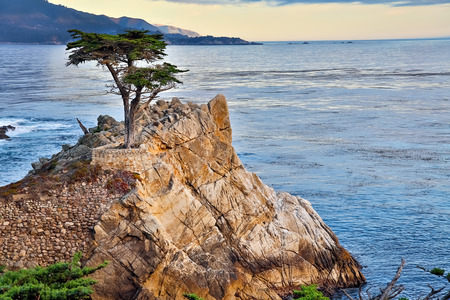 cypress tree: Lone Cypress Tree, California coast