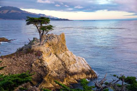 ローン サイプレス ツリー、カリフォルニアの海岸 写真素材
