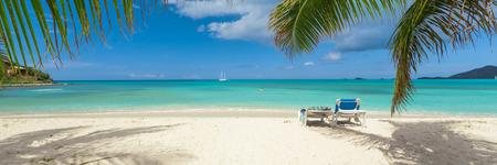 palms: Playa tropical