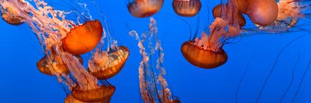 sea creature: Jellyfish
