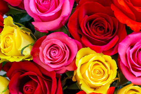 colorful flowers: Colorful roses background