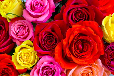 rose coloured: Colorful roses background