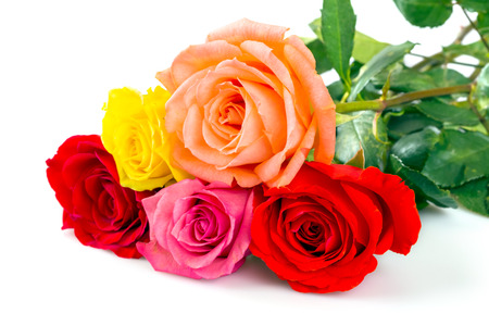Multi colored roses over white background