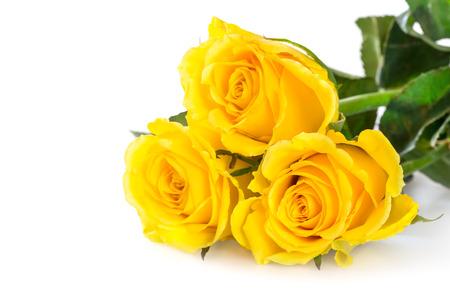 yellow roses: Las rosas amarillas sobre el fondo blanco Foto de archivo