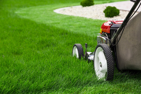 cut grass: Lawn mower