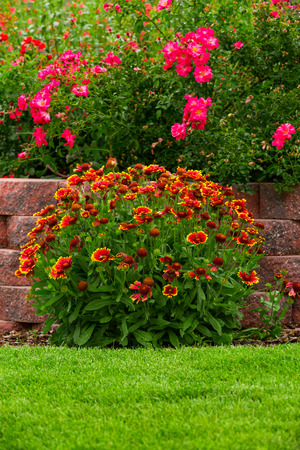 flower gardens: Flores de jard?n