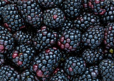 Blackberries Banque d'images