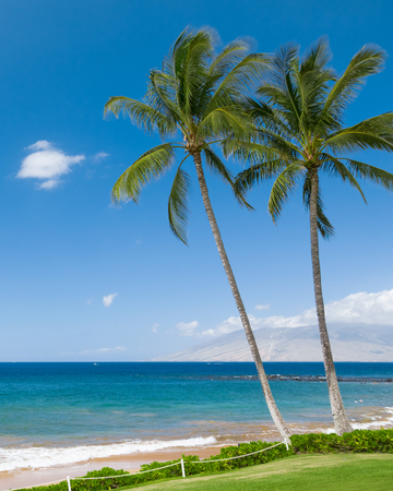 Tropical beach with palm trees 스톡 콘텐츠