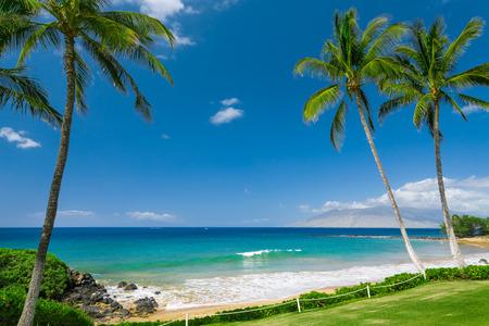 fruta tropical: Tropical Beach con palmeras  Foto de archivo