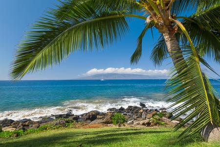tropical tree: Tropical beach with palm tree
