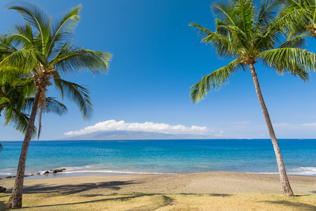Tropical beach with palm trees Imagens