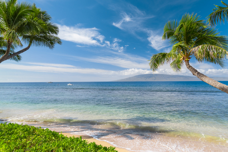 Tropisch strand met palmbomen Stockfoto